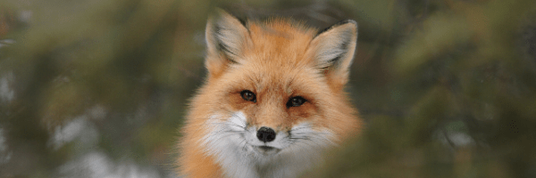 4 Little Foxes of Donor Relationships
